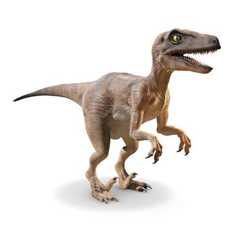 3D Prehistoric Dinosaur Velociraptor