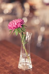 Pink Flower In The Clear Glass On The Cafee Table One Object Nobody