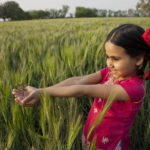 Small Girl With Hands Cupped Standing In Wheat Field